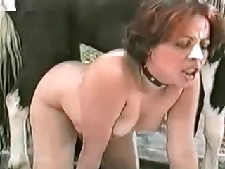 animal clinic in sussex porn videos